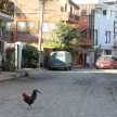 A rooster walks across the dusty cobblestone street in town.