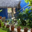 Greenery and thatched roof are nature&#039;s counterpoint to the bright blue stucco.