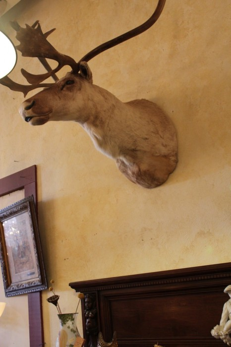 Taxidermy at La Belle Nouvelle Orleans Antiques.