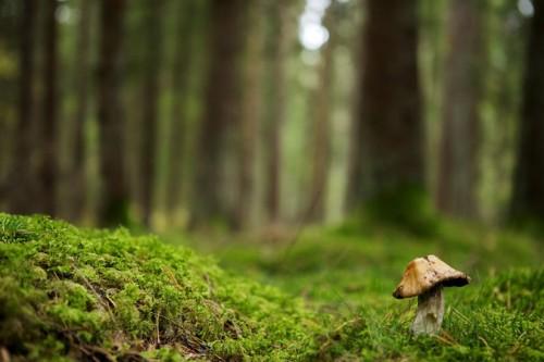 U_mushroom
