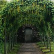 A tunnel green in the extensive 1800s gardens
